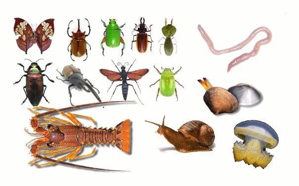 Caracteristicas invertebrados