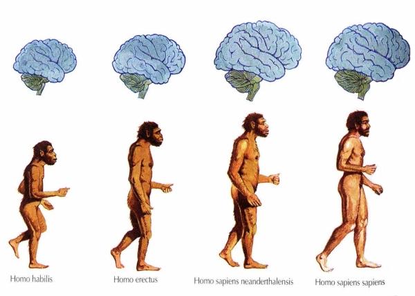 Evolución del hombre de la Edad Media Paleolítico